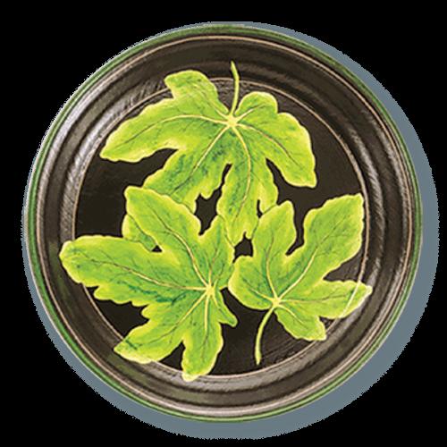 TOL-48 Fig Leaf